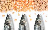 Aquaculture Feed
