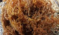 Raw Dried Seaweeds