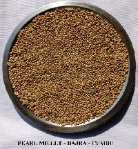Pearl Millet - Bajra - Green Millet