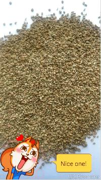 Ajwain seed in gujarat manufacturers and suppliers india for Kitchen xpress overseas ltd