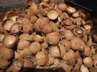Coconut Waste