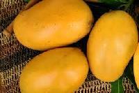 Mallika Mango