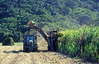Sugar Cane Harvesting Machine