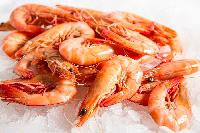 Fresh Prawn Fish