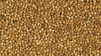Cattle Feed Sorghum