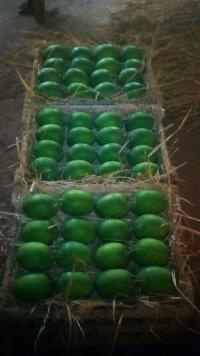 Extra Large Ratnagiri Alphonso  Mangoes