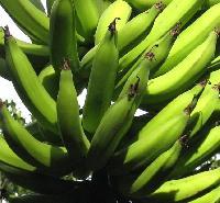 Banana Green