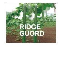 Ridge Gourds