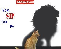 Mutual Fund Distribution