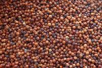 Finger Millet Seeds
