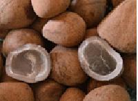 Dried Coconut (copra)