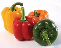 Fresh Bell Pepper