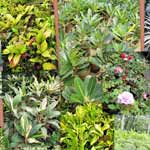 Ornamental Plants