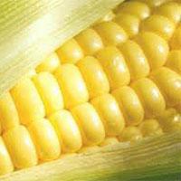 Indian Maize