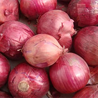 Red Onion 50mm