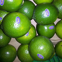 Seedlees Lime