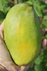 Malika Mangoes