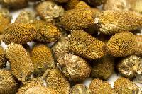 ayurvedic herb