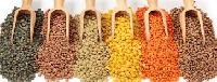 Grains Pulses