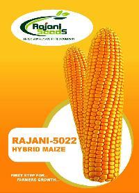 Rajani-5022 Hybrid Maize Seeds