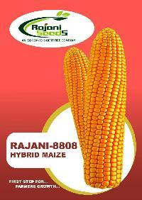 Rajani-8808 Hybrid Maize Seeds