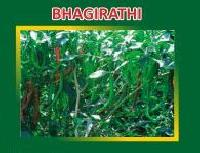 Bhagirathi Hybrid Green Chilli Seeds