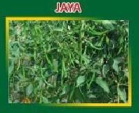 Jaya Hybrid Green Chilli Seeds