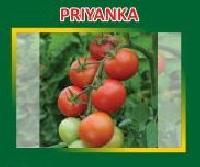 Priyanka Hybrid Tomato Seeds