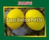 Jhanvi Hybrid Muskmelon Seeds