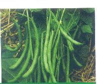 Laxmi Cluster Bean Seeds