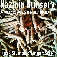 Teak Stumps Big Size