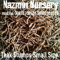 Teak Stumps Small