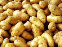 Cold Storage Potato