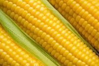 Fresh Maize