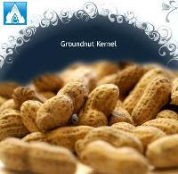 Groundnut Kernel