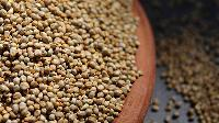 Pearl Millets