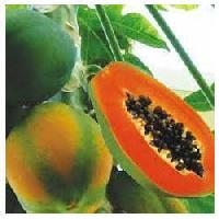 Fresh Organic Papaya