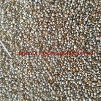 Millet for Animal Feed