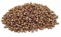 Argyreia Nervosa Seeds