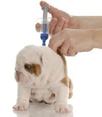 Veterinary Vaccines