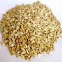 Barley Seed - 01