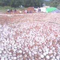 Coconut's Copra