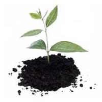 Coir Pith Organic Manure