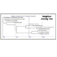 Phylogenetic Analysis Services