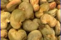 Raw Cashew Nuts Shell