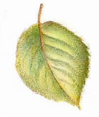 News » Botanical illustration tips on painting leaves - February ...