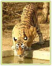 Wildlife Tour Services