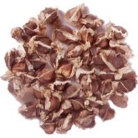 Moringa Oleifera Seed (PKM 1)