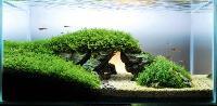 Aquarium Live Plants