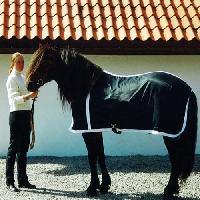 Horse Black Rug